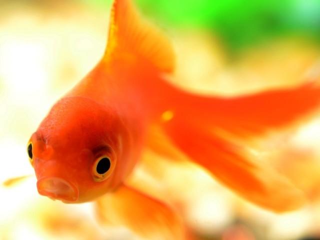 fish-881161_1280-2